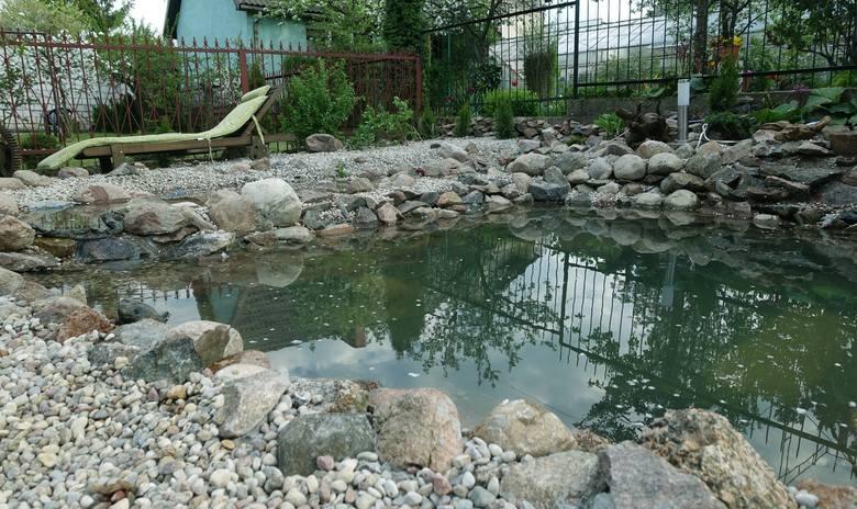 Oczko wodne w przydomowym ogrodzie