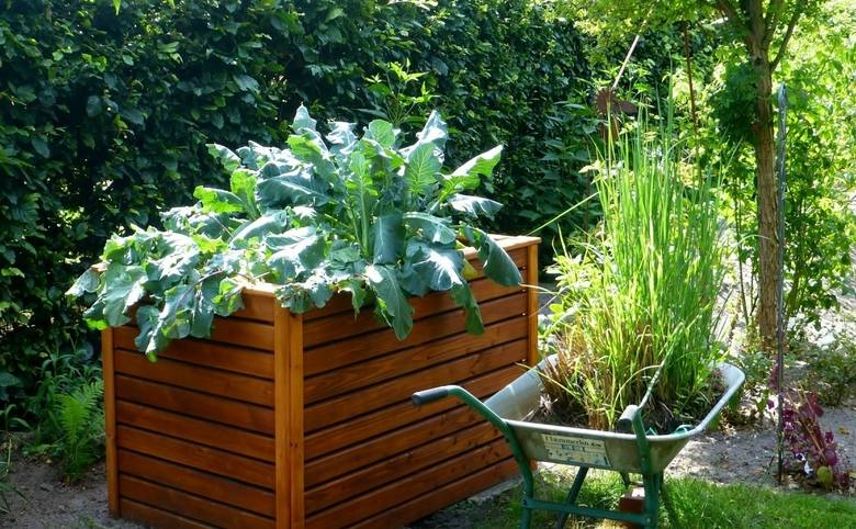 Uprawa warzyw w skrzyniach może być wygodniejsza i wydajniejsza niż na zwykłych grządkach. Szczególnie jeśli ziemia w naszym ogrodzie nie jest najle