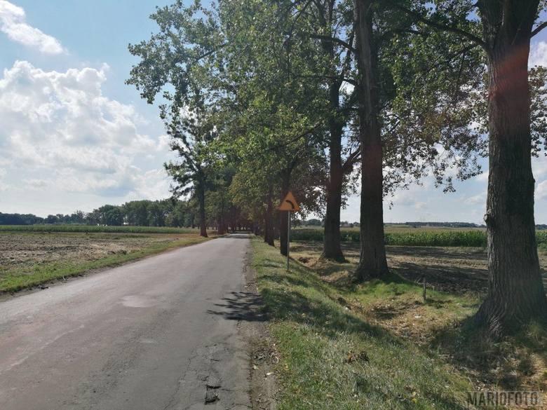 Na podcięte pnie zwrócił uwagę jeden z kierowców. Wiele osób uważa, że tak uszkodzone drzewa trzeba szybko wyciąć.