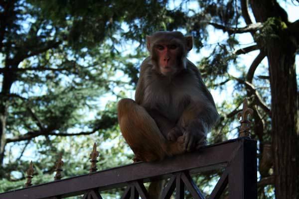 Podróz po Indiach<br /> Shimla, Himachal Pradesh.