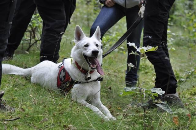 Brooklyn szuka zaginionych. Policjantka z psem pomagały odnaleźć Maję z Wołczkowa [zdjęcia]