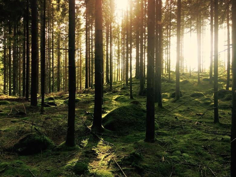 Złapani w lesie przez fotopułapkę! Zobacz, kogo nagrały kamery