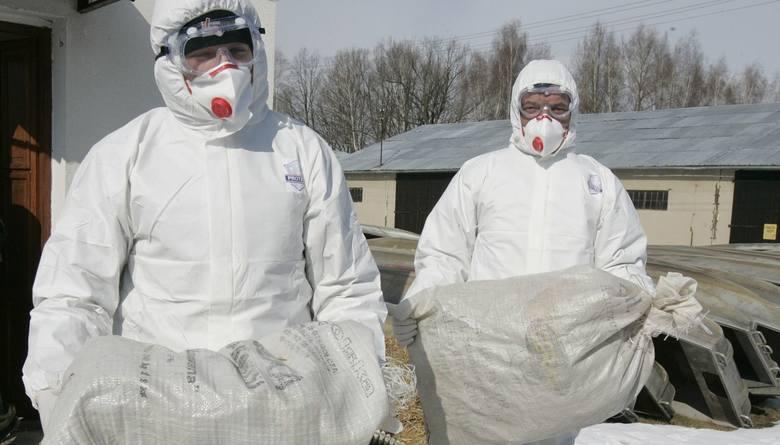 Ptasia grypa: Ruszyły kontrole gospodarstwPtasia grypa: Ruszyły kontrole gospodarstw/zdjęcie ilustracyjne