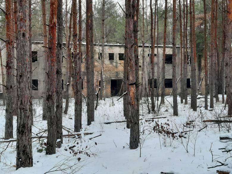 Bunkrowy las w Brożku zimą wygląda jeszcze bardziej tajemniczo