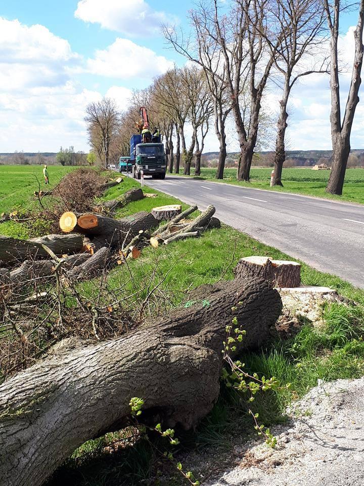 Wiosną wycięto już przy tej drodze część drzew, czemu sprzeciwiali się obrońcy przyrody