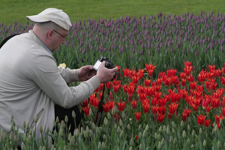 Tulipany w ogrodzie botanicznym. Pola kwiatów przyciągają tłumy ZDJĘCIA