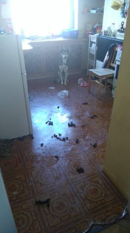 Pies był sam w mieszkaniu przez około tydzień
