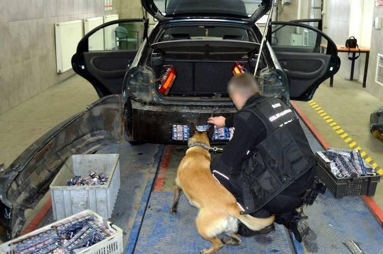 Przemyt 4 tys. paczek papierosów udaremnili funkcjonariusze KAS z drogowego przejścia granicznego w Kuźnicy. Nielegalny towar mundurowi znaleźli w przerobionej