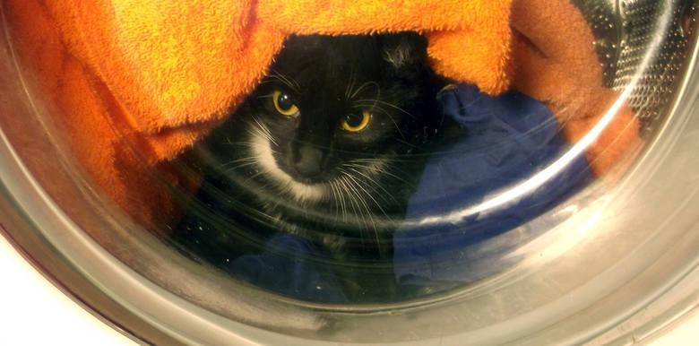 """Studenci zatrzymani za bestialskie zabicie kota. Mieli go """"wyprać"""" w pralce"""