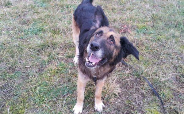ANZELMAnzelm jest psem o niesamowitym wyrazie pyska. Jego uszy (intensywnie leczone) zdają się żyć swoim życiem. Mimo dojrzałego wieku nadal zachowuje