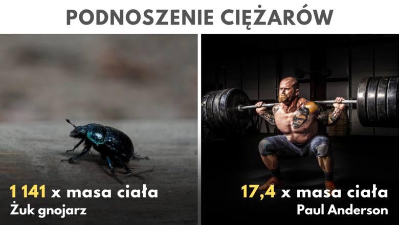 Siły nie powinno mierzyć się bezwzględnie, lecz w proporcji do masy własnej. Zgodnie z tym kryterium najsilniejszymi zwierzętami na świecie są samce