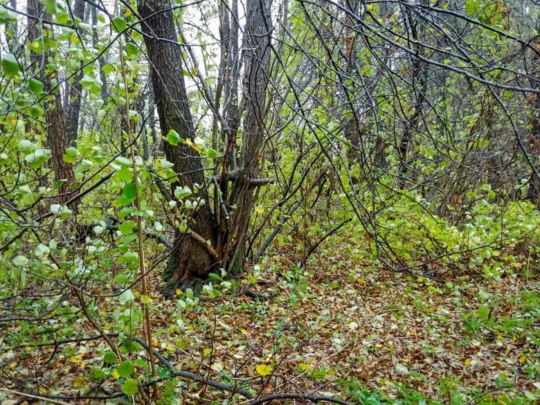 Morderstwo dwójki dzieci w Jeńkach. Las, w którym znaleziono