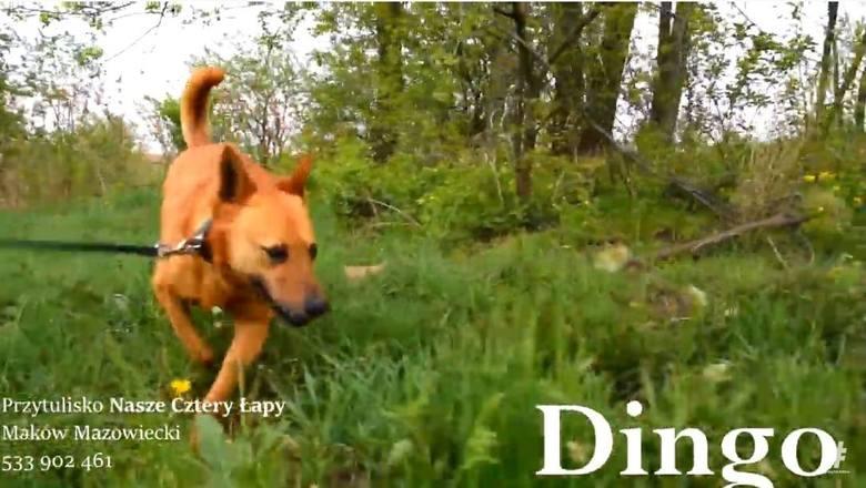 Maków Mazowiecki. Przytulisko Nasze Cztery Łapy zachęca do adopcji psów. Zdjęcia i wideo