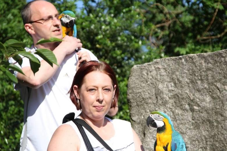 Zwariowane papugi z Retkini - Elvis, Zuzia i Lola rozrabiają na balkonie [zdjęcia]