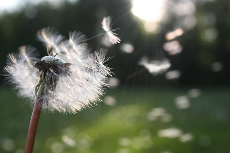 Wiosenna rzeczywistość alergika. Jak sobie z nią radzić?