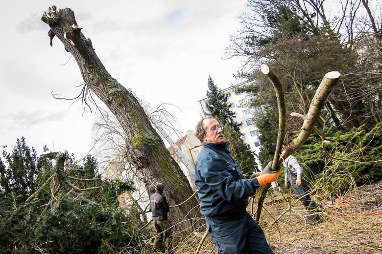 Wczoraj drzewa cięto w ogrodzie botanicznym w Bydgoszczy.
