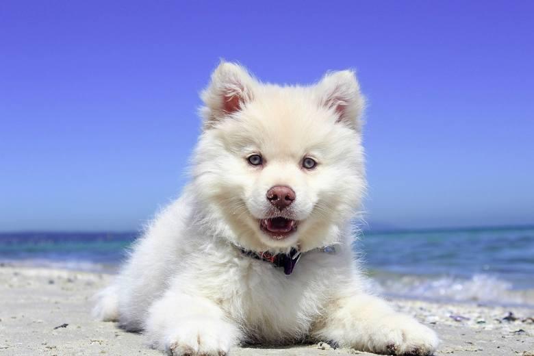 Kocha, lubi, szanuje... Co myśli o tobie twój pies? PSYCHOZABAWA