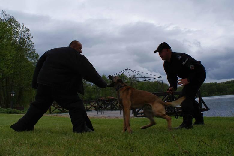 Egzamin dla policyjnych psów z zachodniopomorskiego [zdjęcia]
