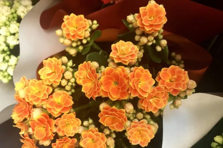 """Oczywiście nie namawiamy do wychodzenia po """"zbędne rzeczy"""", ale kwiaty doniczkowe można kupić przy okazji robienia zakupów spożywczych, bo bywają one"""