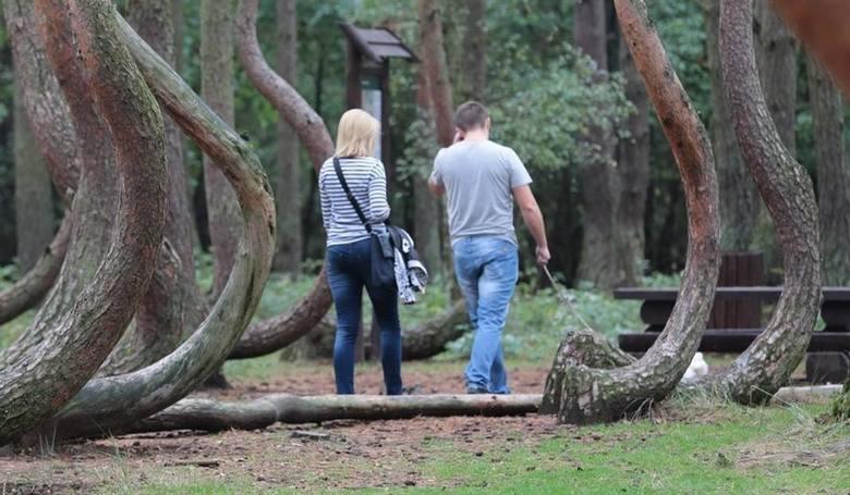 Krzywy Las znajduje się w powiecie gryfińskim. Rośnie w nim około stu dziwnie powyginanych drzew. Las znajduje się w okolicach osiedla w Nowym Czarnowie