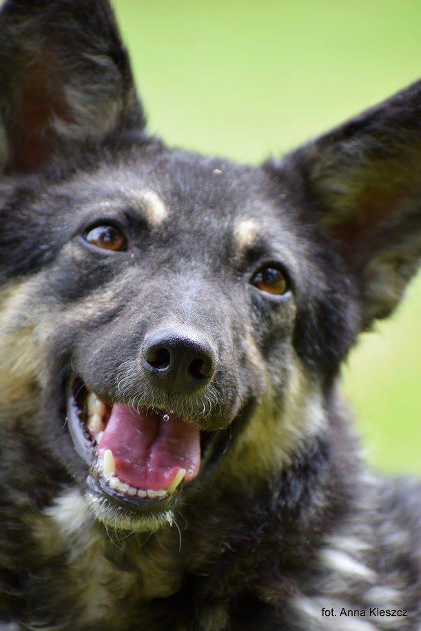 Agnieszce Szareckiej, szefowej toruńskiego przytuliska Bogusia jako żywo przypominała psa Amorka, który trafił tam w sierpniu 2015 roku. Był wtedy młodym