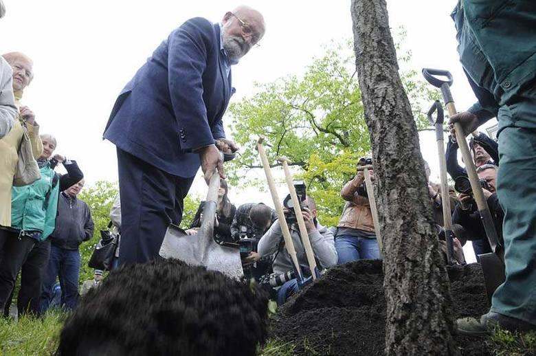 Profesor Krzysztof Penderecki posadził dąb w Bydgoszczy [zdjęcia, wideo]