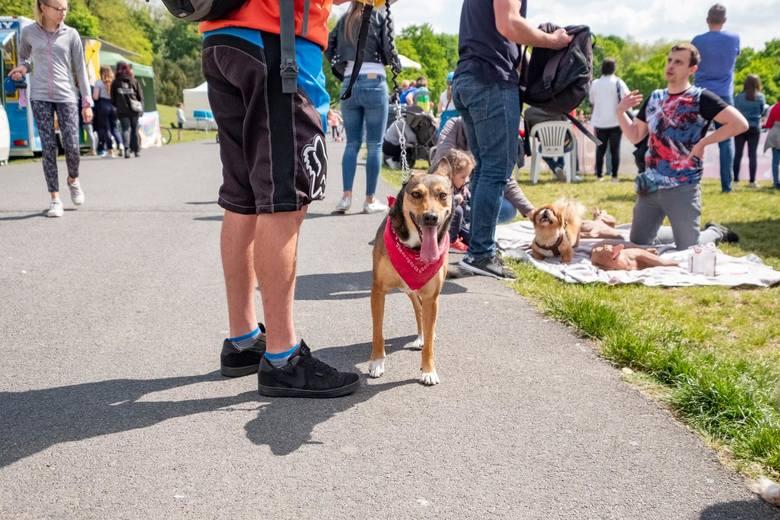 W mieście obowiązkowo psa należy wyprowadzać na smyczy. Regulują to przepisy, a także proszę o to inni właściciele czworonogów. - Puszczenie psa luzem