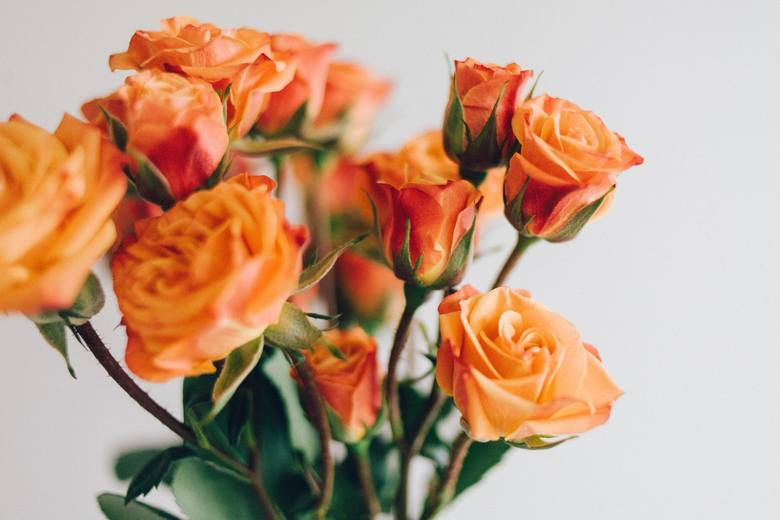 W imieniny Elżbiety każdą solenizantkę na pewno ucieszą piękne życzenia imieninowe. Dla Elżbiety, Eli, Eluni przygotowaliśmy piękne życzenia i wierszyki