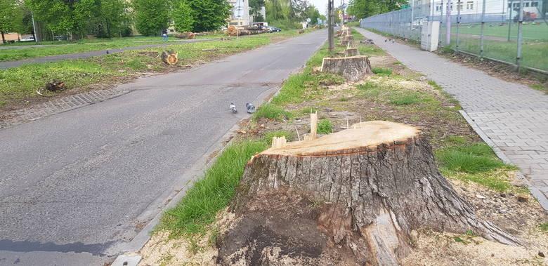 Przy ul. Spacerowej łącznie mają zostać wycięte 54 drzewa
