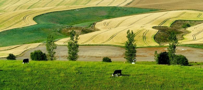 Ceny za hektar ziemi rolnej 2019. Stawki w II kwartale roku [dane GUS wrzesień]