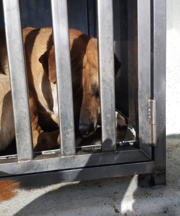 Zambrów. Bezpański pies pogryzł 12-latka w miejskim parku. Dziecko trafiło do szpitala