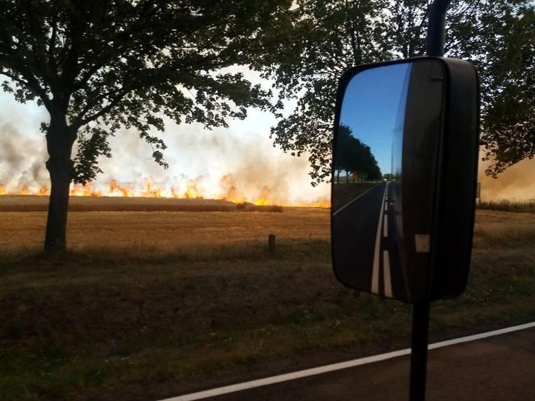 Gigantyczny pożar wybuchł w piątek, 26 lipca, na polu koło Złotnika pod Żarami. Na miejsce ściągają wozy straży pożarnej.Płomienie objęły ogromną część