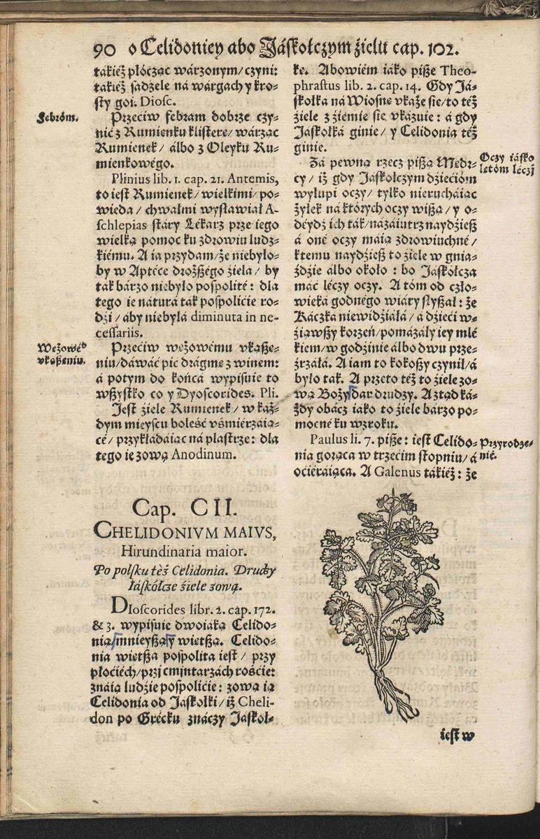 Podtytuły mają trzy wersje językowe: po grecku, łacińską i po polsku, ale opisy roślin są już spisane w rodzimym języku autora. Tutaj strona poświęcona jaskółczemu zielu.