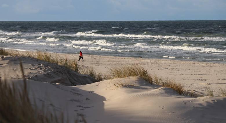 Nad Bałtykiem wciąż rozmawiają drapieżne morskie orły. Podczas noworocznego spaceru można też spotkać… morsa