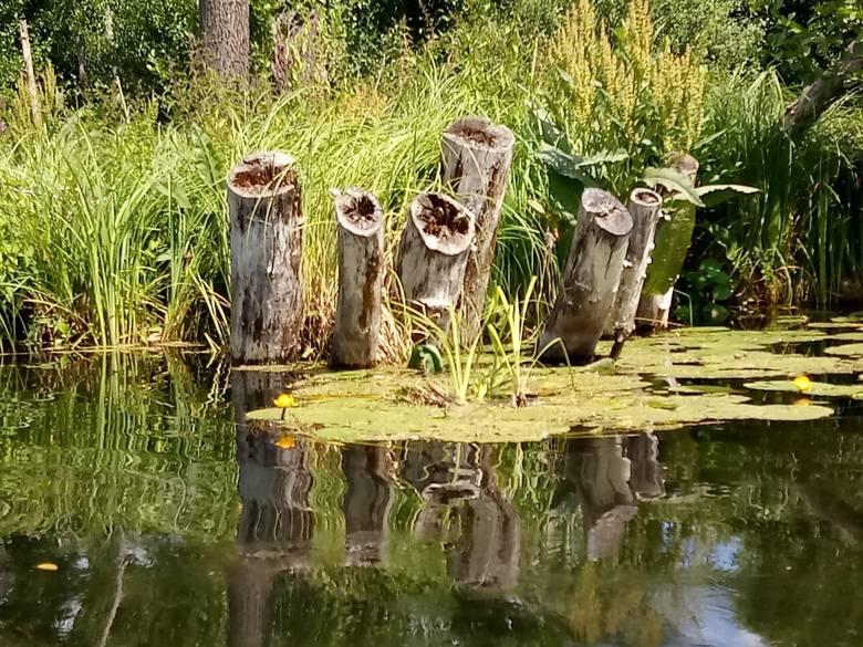 """""""To najdłuższy po Mazurach szlak żeglugowy o długości ponad 70 km"""" – czytamy w wielu publikacjach. Szlak wodny Lubuskich Mazur ma odcinki absolutnie piękne (na zdjęciach fragment z jeziora Osiek do Wielkiego w Dobiegniewie), ale Mierzęcką Strugą nie dało się w tym roku przepłynąć."""