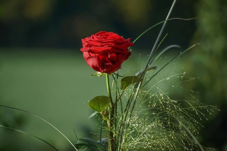 Cięte kwiaty i życzenia to najlepszy zestaw na imieniny