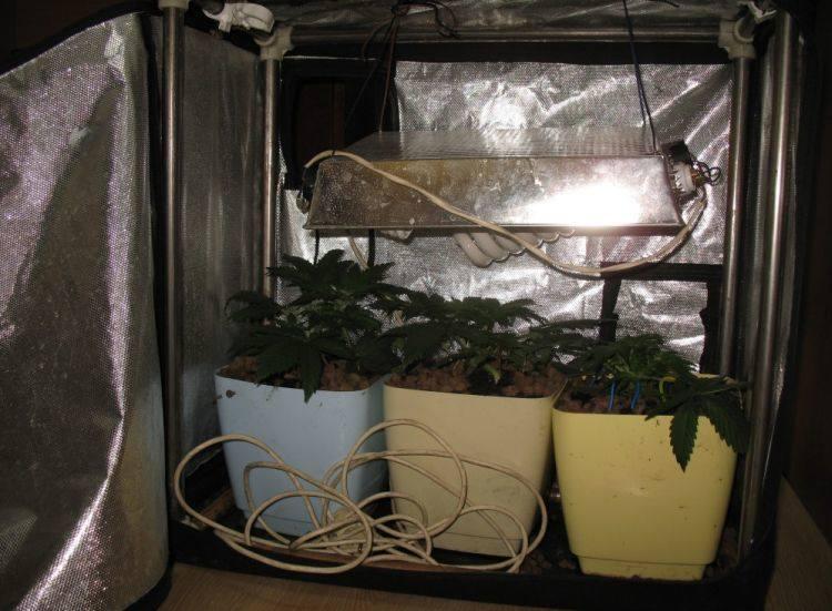 Augustów. Domowa uprawa marihuany u 23-latka (zdjęcia)