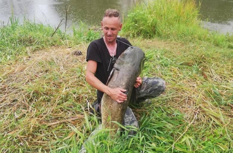 30 kilogramów i prawie 2 metry długości - to dane olbrzyma, którego z Warty na początku sierpnia wyłowił Tomasz Gaba. Przejdź dalej i sprawdź szczegóły