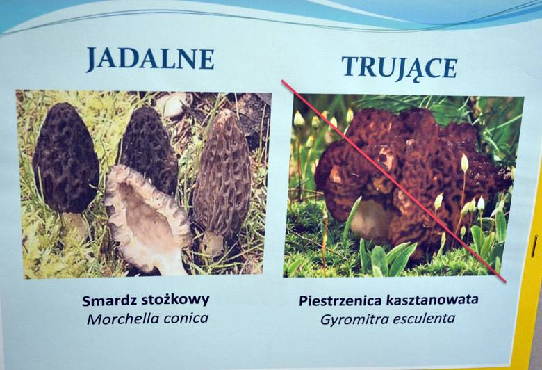 Jadalny Smardz Stożkowy, a trująca Piestrzenica Kasztanowata:Jadalny Smardz stożkowy występuje na wiosnę, dodatkowo jest pod ochroną. Jednakże Piestrzenica