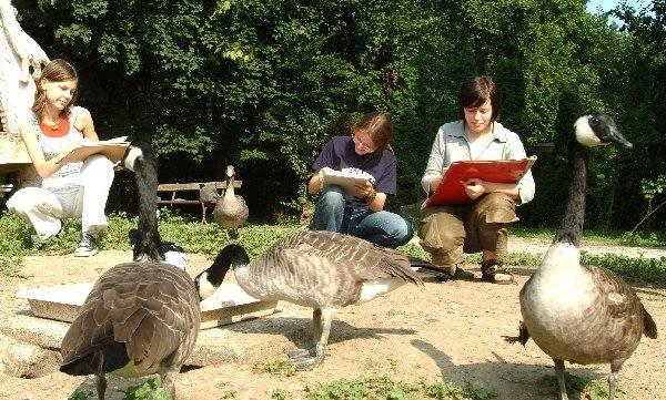 Goście w zoo