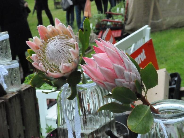 Na Festiwalu Ogrodniczym w Branitz nie brakuje ciekawych roślin