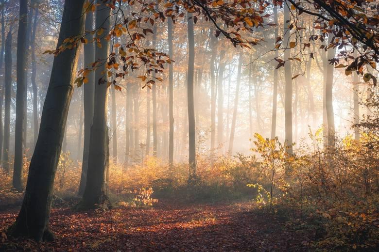 Kacper Borkowski z PrzemkowaZamiłowanie do przyrody sprawiło, że ukończył Technikum Leśne i został podleśniczym. Bliskie sąsiedztwo lasów naturalnie