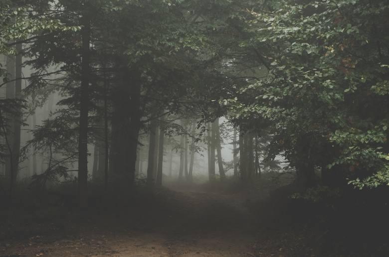 Drzewa ostrzegają o niebezpieczeństwieSystem korzeniowy współpracujący z grzybnią służy nie tylko do przesyłania wsparcia, ale także do ostrzegania przed