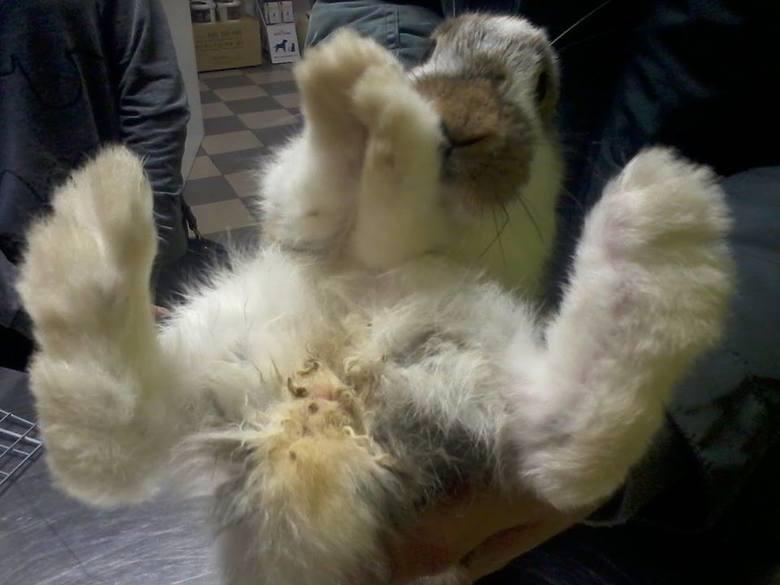Korki pomogą króliczkowi [zdjęcia]