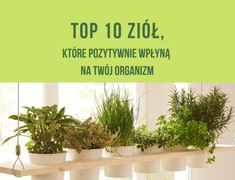 TOP 10 ziół, które pozytywnie wpłyną na Twój organizm. https://dziennikbaltycki.pl/top-10-ziol-ktore-pozytywnie-wplyna-na-twoj-organizm-jak-dziala-m