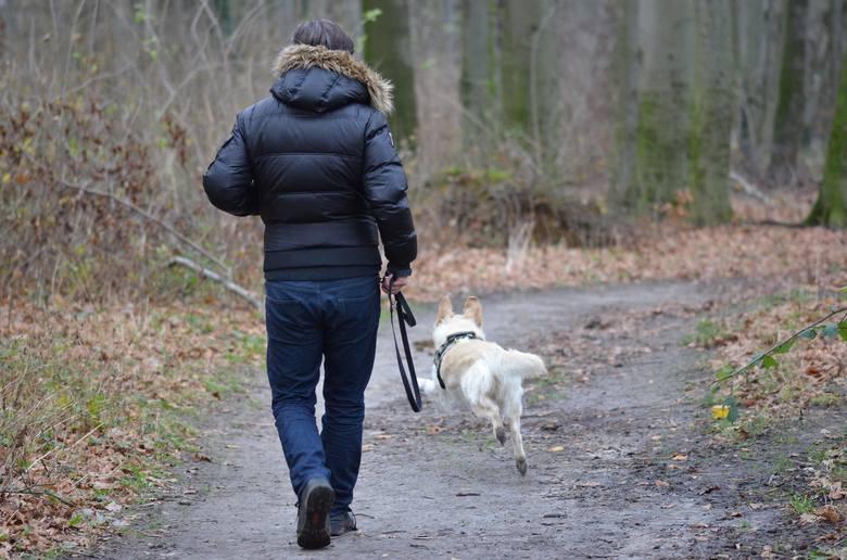 Opiekunom psów, które biegają bez smyczy w miejscu publicznym będzie grozić manat w wysokości 250 złotych. Co ważne, mandat ten grozi nie tylko właścicielowi