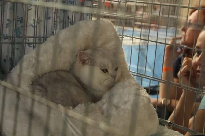Podczas imprezy można również kupić różnego rodzaju akcesoria dla kotów.