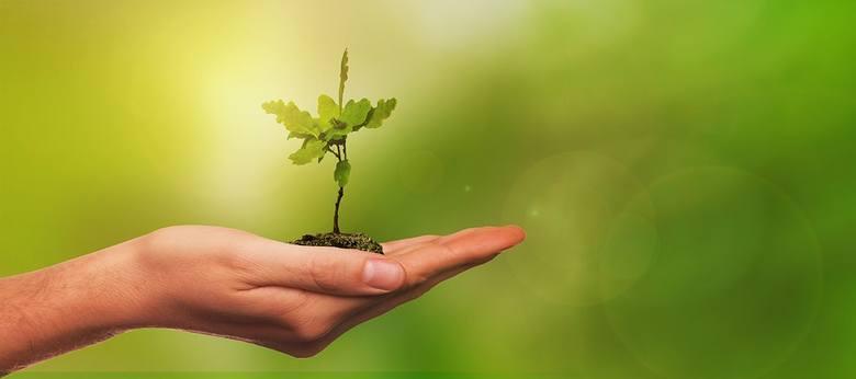 Państwowa Inspekcja Sanitarna i Lasy Państwowe zapraszają wszystkich chętnych do Nadleśnictwa Babki na wspólną akcję sadzenia drzew.