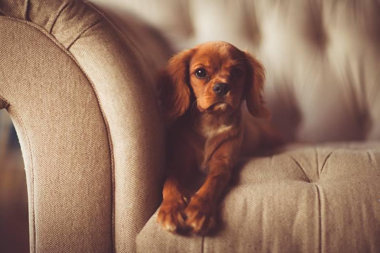 Ile żyją zwierzęta domowe? Pamiętaj - kupując, bierzesz odpowiedzialność za całe ich życie