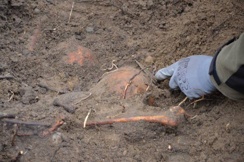 Szczątki zostaną przewiezione na cmentarz wojenny do Glinnej i tam pochowane